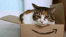Un gatto all'interno di un pacco Amazon, nuovo accordo con Poste Italiane
