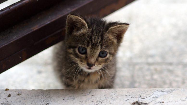 Consigli per la prima volta di un gattino in casa