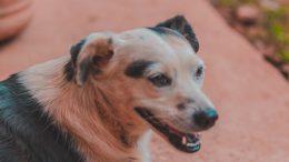 Sorriso del cane, come lavare i denti