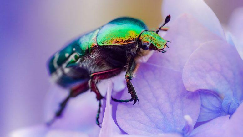 Come liberarsi dagli scarafaggi